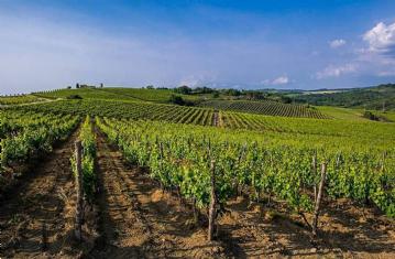 Terroir zapadne Istre, Brtonigla